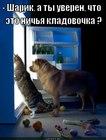 https://lolkot.ru/2012/07/10/sharik-a-ty-uveren-chto-eto-nichya-kladovochka/