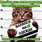 https://lolkot.ru/2017/05/10/sherstyanoy-naches/