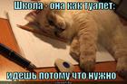 https://lolkot.ru/2014/12/10/shkolnaya-metafora/