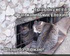 https://lolkot.ru/2011/03/19/shpashiba/