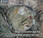 https://lolkot.ru/2013/10/23/shustryy-popalsya/