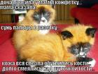 https://lolkot.ru/2012/12/06/shutka-yumora/