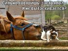 https://lolkot.ru/2012/04/13/silno-zastryalo/