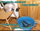 https://lolkot.ru/2014/11/17/silovoye-pole/