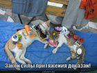 https://lolkot.ru/2011/03/23/sily-prityazheniya/