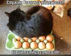 https://lolkot.ru/2014/09/14/skaz-o-gavrile/