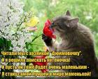 https://lolkot.ru/2019/06/06/skazochnyy-kotenok/
