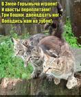 https://lolkot.ru/2017/06/29/skazochnyy-personazh/