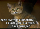https://lolkot.ru/2010/08/24/skrestili-s-yenotom/
