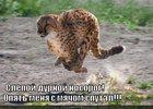 https://lolkot.ru/2011/03/06/slepoy-nosorog/