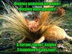 https://lolkot.ru/2020/02/25/slonogonyalnaya-firma/