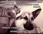https://lolkot.ru/2015/05/02/sluhi-2/