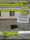 https://lolkot.ru/2017/12/12/sluzhebnyy-kotomobil/