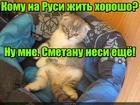 https://lolkot.ru/2017/01/16/smetannaya-nisha/