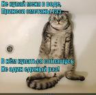 https://lolkot.ru/2014/12/19/smetannuyu-masku-mne-na-vsyo-telo/