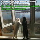 https://lolkot.ru/2017/07/05/smutnyye-vospominaniya/