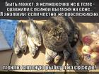 https://lolkot.ru/2014/01/27/sobaka-na-sene/