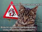 https://lolkot.ru/2014/03/24/sobakov-ne-nado/