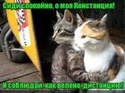 https://lolkot.ru/2020/06/16/soblyudennoye-sideniye/