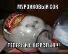 https://lolkot.ru/2012/04/06/sok-s-sherstyu/