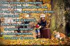 https://lolkot.ru/2017/09/25/sokrovischa-oseni/