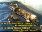 https://lolkot.ru/2015/05/04/soldat-spit-a-sluzhba-idet/