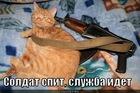 https://lolkot.ru/2012/01/07/soldat-spit-sluzhba-idet/