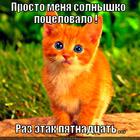 https://lolkot.ru/2012/09/14/solnyshko-potselovalo/