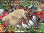 https://lolkot.ru/2014/09/27/son-na-strazhe/
