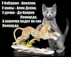 https://lolkot.ru/2020/01/22/sonnyye-kumiry/