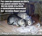 https://lolkot.ru/2016/03/15/soobrazitelnyye-pomoschniki/