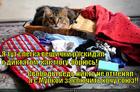 https://lolkot.ru/2014/03/20/soyuz-2/