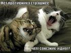 https://lolkot.ru/2013/01/28/soyuznik-idiot/