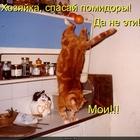https://lolkot.ru/2010/07/06/spasay-pomidory/