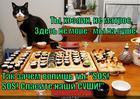 https://lolkot.ru/2014/10/11/spasite-nashi-sushi/