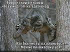 https://lolkot.ru/2014/04/22/sploshnoye-nayepatelstvo/