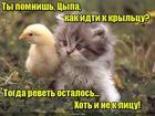 https://lolkot.ru/2017/06/15/sposob-dobratsya-domoy/