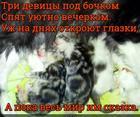 https://lolkot.ru/2018/02/12/spyaschaya-skazka/