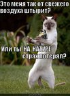 https://lolkot.ru/2010/10/28/strah-poteryal/