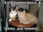 https://lolkot.ru/2012/11/25/strannaya-fraza/