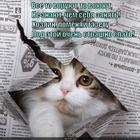 https://lolkot.ru/2014/06/17/stremnoye-odeyaltse/