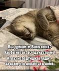 https://lolkot.ru/2020/05/15/stremnyy-glaz/