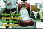 https://lolkot.ru/2018/05/18/strizhka-pod-sfiksa/