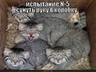 https://lolkot.ru/2010/08/11/sunut-ruku-v-korobku/