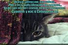 https://lolkot.ru/2014/06/10/surovoye-sibirskoye-kote/
