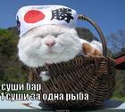 https://lolkot.ru/2014/12/15/sushi-2/