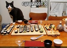 https://lolkot.ru/2011/04/14/sushi-kot-8/