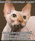 https://lolkot.ru/2013/03/24/svet-moy-zerkaltse-4/