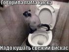 https://lolkot.ru/2011/03/31/svezhiy-viskas/
