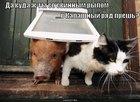 https://lolkot.ru/2010/11/04/svinnoye-rylo/